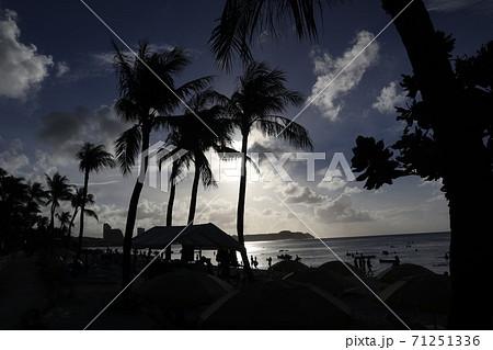海外リゾート地のヤシの木のシルエット 71251336