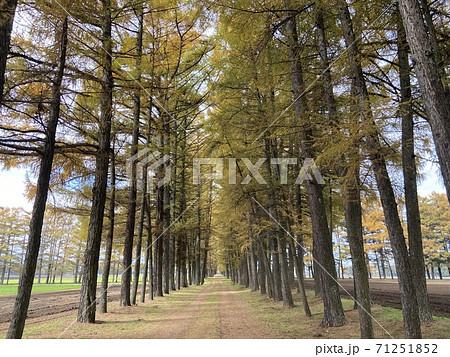 遠くまで伸びる道のある杉並木の風景 71251852