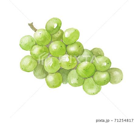葡萄 シャインマスカット 71254817