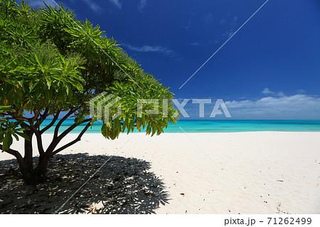 ニューカレドニア ウベア島のビーチの木陰 71262499