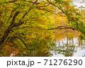世界遺産白神山地の秋 紅葉の十二湖 2019_150 王池 71276290