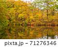 世界遺産白神山地の秋 紅葉の十二湖 2019_153 王池 71276346