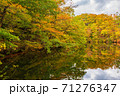 世界遺産白神山地の秋 紅葉の十二湖 2019_154 王池 71276347
