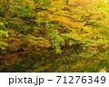 世界遺産白神山地の秋 紅葉の十二湖 2019_156 王池 71276349