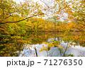 世界遺産白神山地の秋 紅葉の十二湖 2019_157 王池 71276350