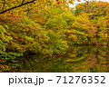 世界遺産白神山地の秋 紅葉の十二湖 2019_159 王池 71276352