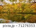 世界遺産白神山地の秋 紅葉の十二湖 2019_160 王池 71276353