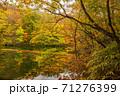 世界遺産白神山地の秋 紅葉の十二湖 王池 71276399