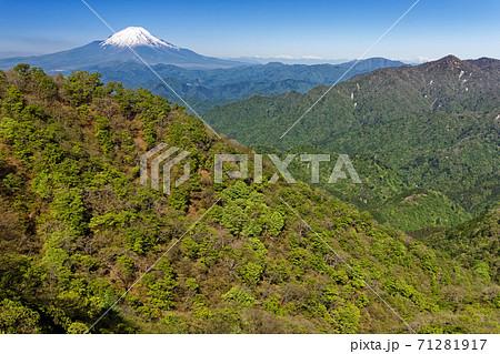 丹沢・塔ノ岳稜線から見る新緑のブナ林と富士山 71281917