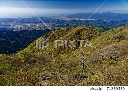 丹沢・塔ノ岳から見る新緑の大倉尾根と秦野・小田原方面の眺め 71289530
