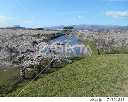 五稜郭の桜と堀 地上から見た風景 71301813