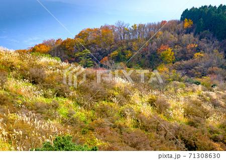 大和葛城山の山頂付近の紅葉 71308630