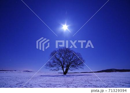 ハルニレの木と月 71329394
