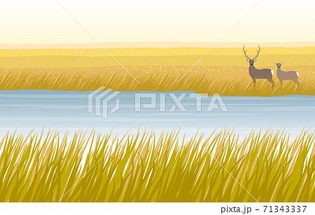 秋の湿原と鹿のカップル 71343337