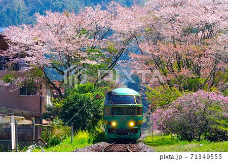 桜とゆふいんの森 71349555