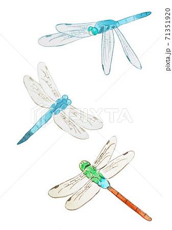 蜻蛉 71351920