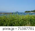 大分県臼杵市 大泊漁港付近 71387701