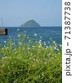 津久見島と浜大根 (大分県臼杵市) 71387738