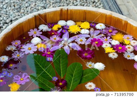 水に浮かぶ花々で占う山寺立石寺の花占い 71395700