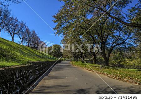 信州 長野県飯山市秋の長峰スポーツ公園 71411498
