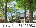 寺社仏閣 松月院山門横のヒイラギと爽やかな木立 東京都板橋区 71426988