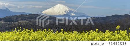 ナノハナと富士山の横長写真/吾妻山公園(神奈川県二宮町) 71452353