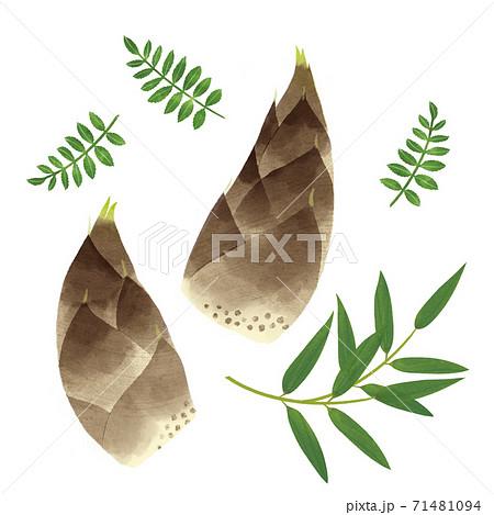 タケノコと木の芽の手描きイラスト/春の山菜 71481094