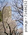 青空の下の満開の桜とタワーマンション 71486252