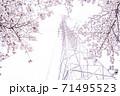 満開の桜と送電塔【色鉛筆】 71495523