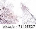 満開の桜と送電塔【色鉛筆】 71495527