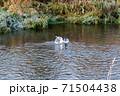 魚取りをする鳥、カモメ 71504438
