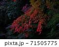 紅葉 71505775