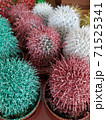 Small cactus painted in color and sprinkled with glitters 71525341