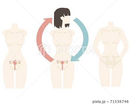 女性のホルモンバランスと子宮のセット 71536746