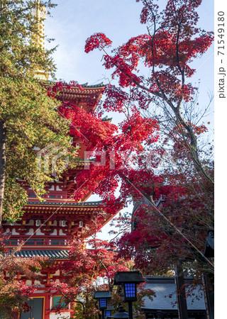 高幡不動の五重塔と色づくもみじの紅葉 71549180