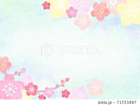 水彩で描いた和風の梅の花の背景イラスト 71553887