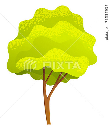 Green bright spring high tree with a lush crown, thin brown trunk and branches isolated on white 71557937