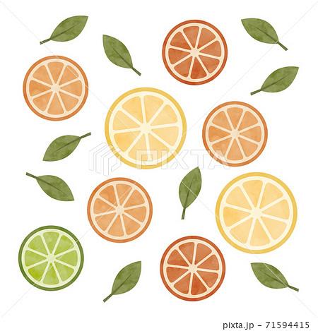 スライスした柑橘類の水彩イラスト 71594415