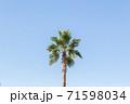 ナツメヤシと青空 71598034