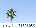 ナツメヤシと青空 71598035