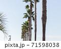 ナツメヤシと青空 71598038