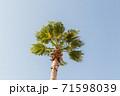 ナツメヤシと青空 71598039