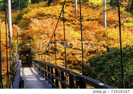 秋の高雄もみじ橋 71616187
