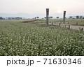 植物 そば そばの花 71630346