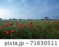花 赤 ケシ 71630511