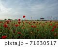 花 赤 ケシ 71630517
