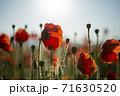 花 風景 赤 71630520