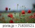 花 風景 赤 71630521