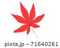 一枚真っ赤な紅葉の葉 今見頃の紅葉イメージ 赤色モミシ  71640261