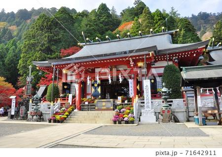 大山阿夫利神社(下社)の拝殿と鮮やかな紅葉とざる菊 71642911